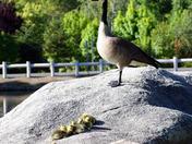 Easter ducklings 2014