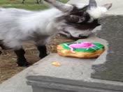 Easter Goat