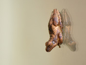5d. Tree frog