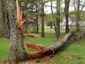 Large Tree Down in Georges Township-Fayette County