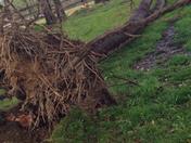 wind damage from Allison Jurczak