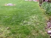 Hail in Lomira