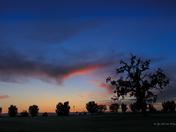 Wild Wings Sunset