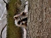 Peek-a-boo