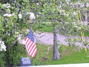MEMORIAL  DAY  at  REED ROAD BRIDGE