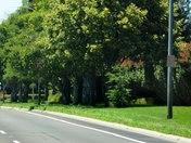 Elk Grove is Green