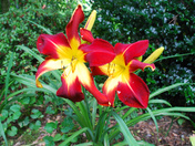 LATE SPRING FLOWERS