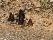 Ft. Indiantown Gap Wildlife