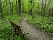 Rest stop along the Spicebush Trail