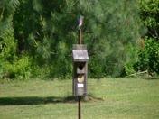 Time-lapse Bluebird Feeding