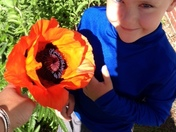 A poppy as big as Jake!