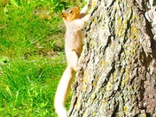 WHITE SQUIRREL IN FORT DODGE