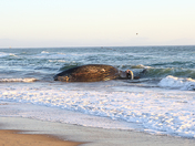 Whale washes up onto shore