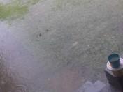 my yard is a pool