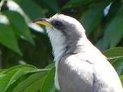 Interesting bird find.