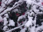 Spring and Summer in Greater Cincinnati