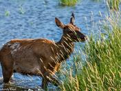 Iowa Wildlife