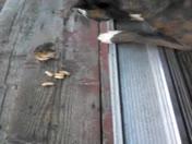 Dog and chipmunks