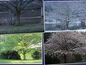 Four Seasons Along The Allegheny