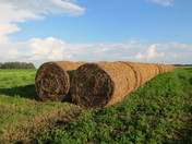 Twin rows of bales