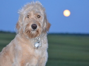 Charley and the Super Moon
