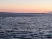 sunset and crazy birds