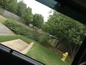 Tree Damage Springdale.