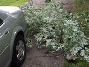 Storm damage part 3
