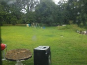 Is a picture of my yard at a branch in the rain drops at them