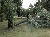 small trees down w power otages
