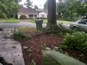 Limbs down from wind