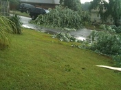 Tree fell down on top of car and few big limbs down all over the road