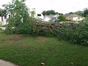 down tree in siloam springs subdivision