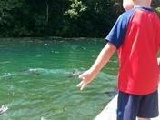 Phoenix feeding fish at Roaring river hatchery