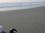 Doggies stroller beach