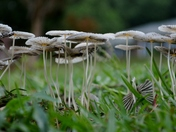 Front Yard Fungi