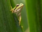 4e. Tree frog