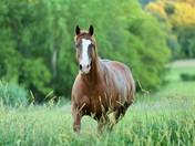 Horse Alert!