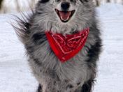 Smiling Merlin