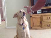 Mya  - treat on nose trick!