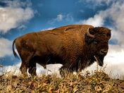 Fan Favorite Winner - Yellowstone National Park