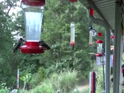 A swarm of Hummingbirds