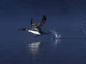 Loon Takeoff
