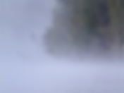 Loon in early morning fog