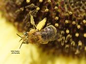 blanket of pollen