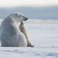Grand Prize Winner - Arctic National Wildlife Refuge