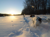 3a. Winter trails