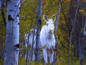 Fall foliage and Albino moose