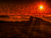 Flying towards Dawn