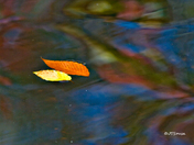 Water/Fall